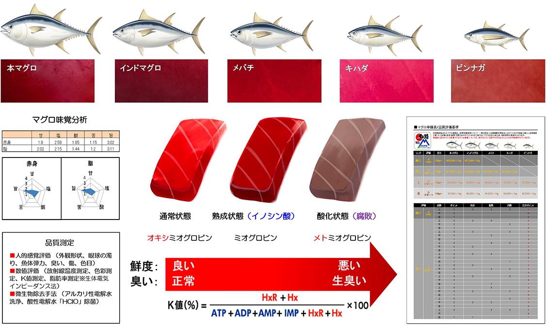和鮪認証対象魚種